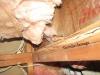 termite-damage-2b